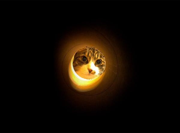 Paper Tube Kitties