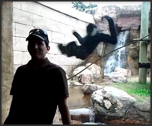 Alpha Male Monkey Attack
