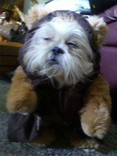 Dogs That Looks Like An Ewok
