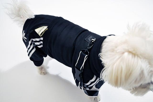 Dog Tracksuit