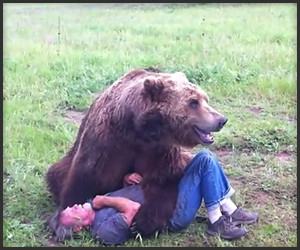 Grizzly Bear Plays with Trainer