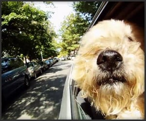 Dogs in Cars: Vornado