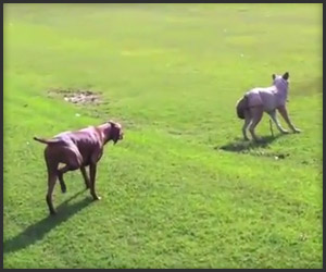 Dog Approaches Wolf