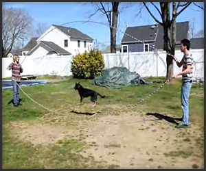 Double Dutch Dog