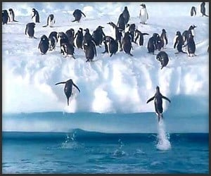 Penguins vs. Iceberg