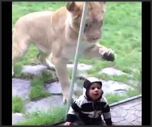 Lion Wants to Eat Baby
