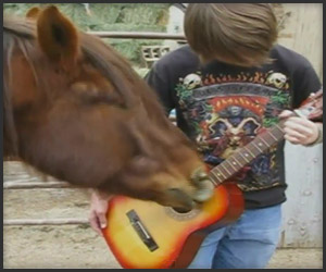 Horse Plays Guitar