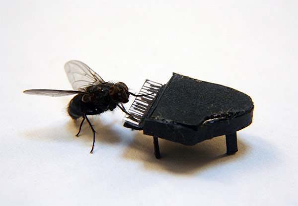 The Adventures of Mr. Fly