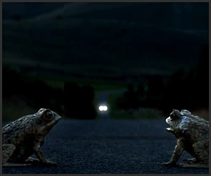 Cane Toad Road