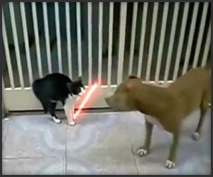 Jedi Cat vs. Pitbull