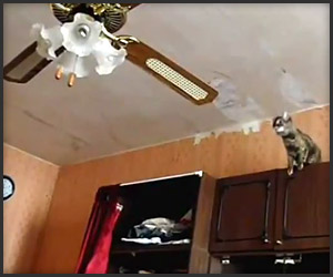 Cat vs. Ceiling Fan
