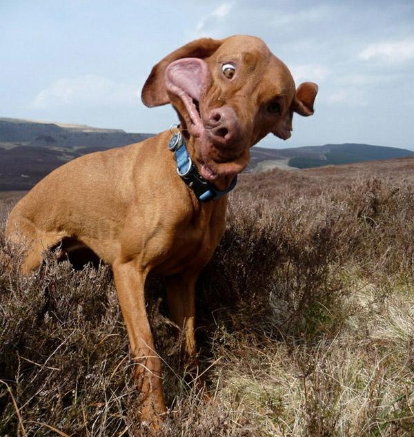 Sneezing Dogs
