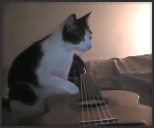 Cat. Guitar. Earthquake.