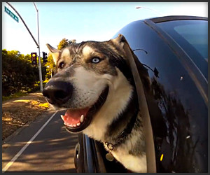 Dogs in Cars: California