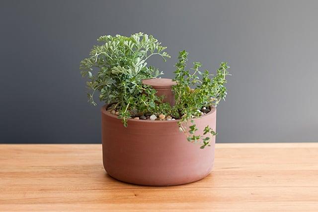 Self-Watering Planter