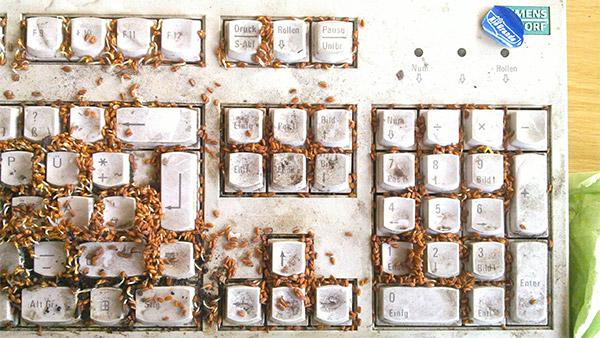 Chia Keyboard Prank