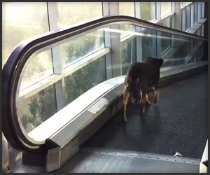 Dog vs. Escalator