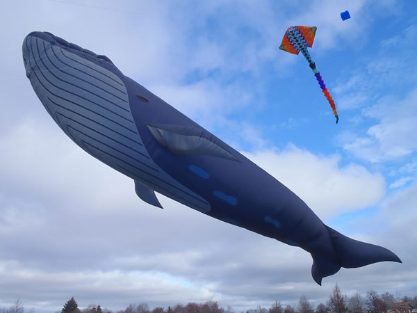 Blue Whale Kite