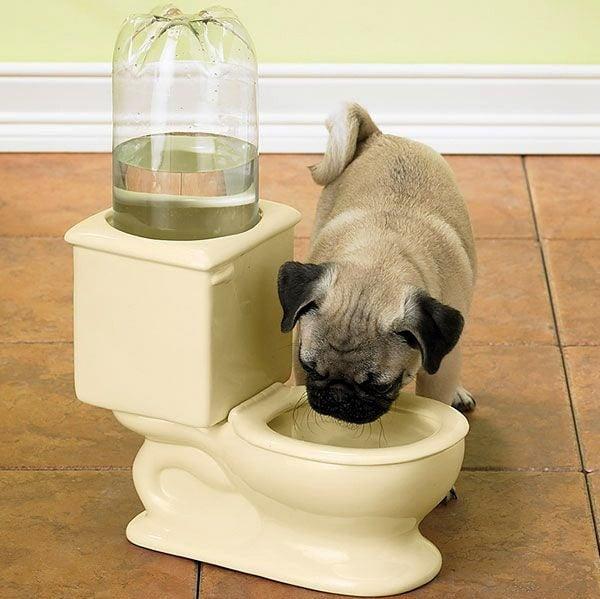 Toilet Water Pet Bowl