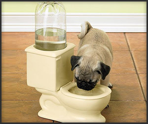 Toilet Water Pet Bowl