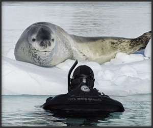 Hunting Lessons from a Seal