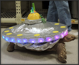 Unidentified Flying Tortoise