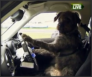 Dog Driving School