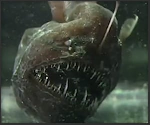 True Facts About the Anglerfish
