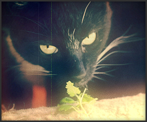 Catnip: Egress to Oblivion