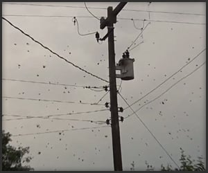 Creepy Neighborhood Spiders