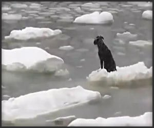 Icy Dog Rescue