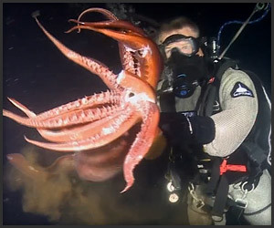 Swimming with a Humboldt Squid