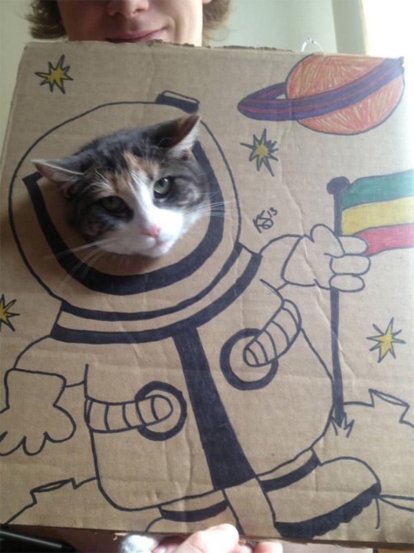 Cardboard Cats