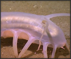 True Facts About the Sea Pig