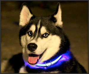 HALO Mini Pet Collar
