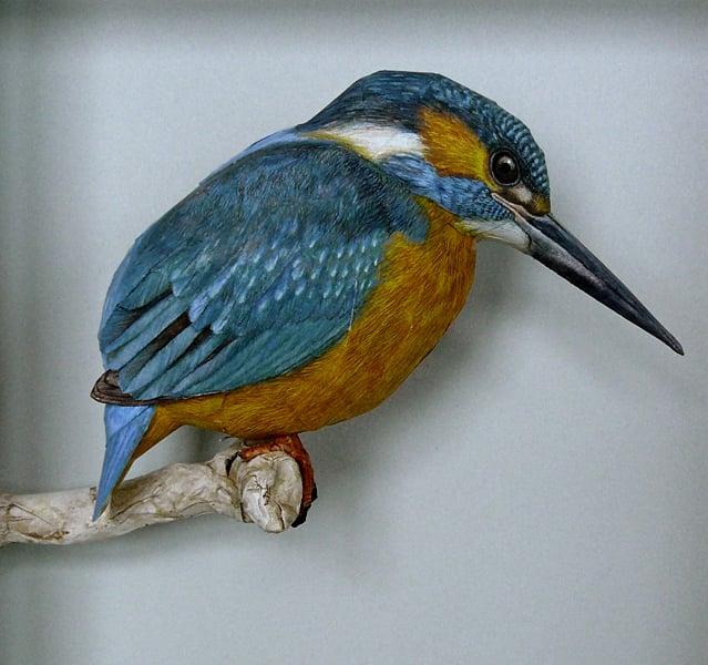 Johan Scherft's Papercraft Birds