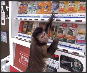 Monkey Buys a Drink
