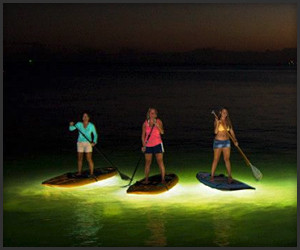 Nocqua 2000 Paddle Lighting