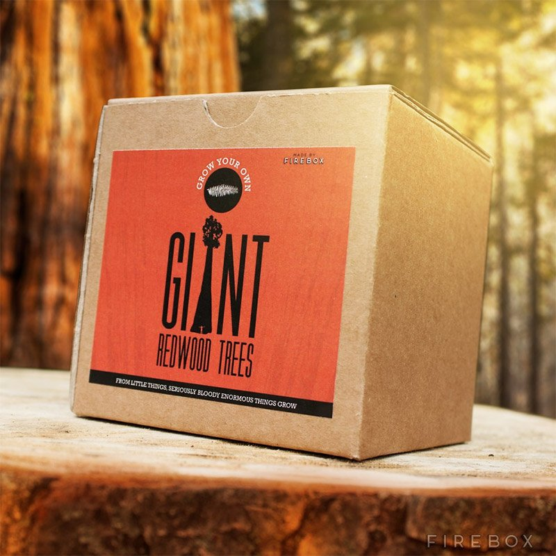 Grow Your Own Giant Redwood