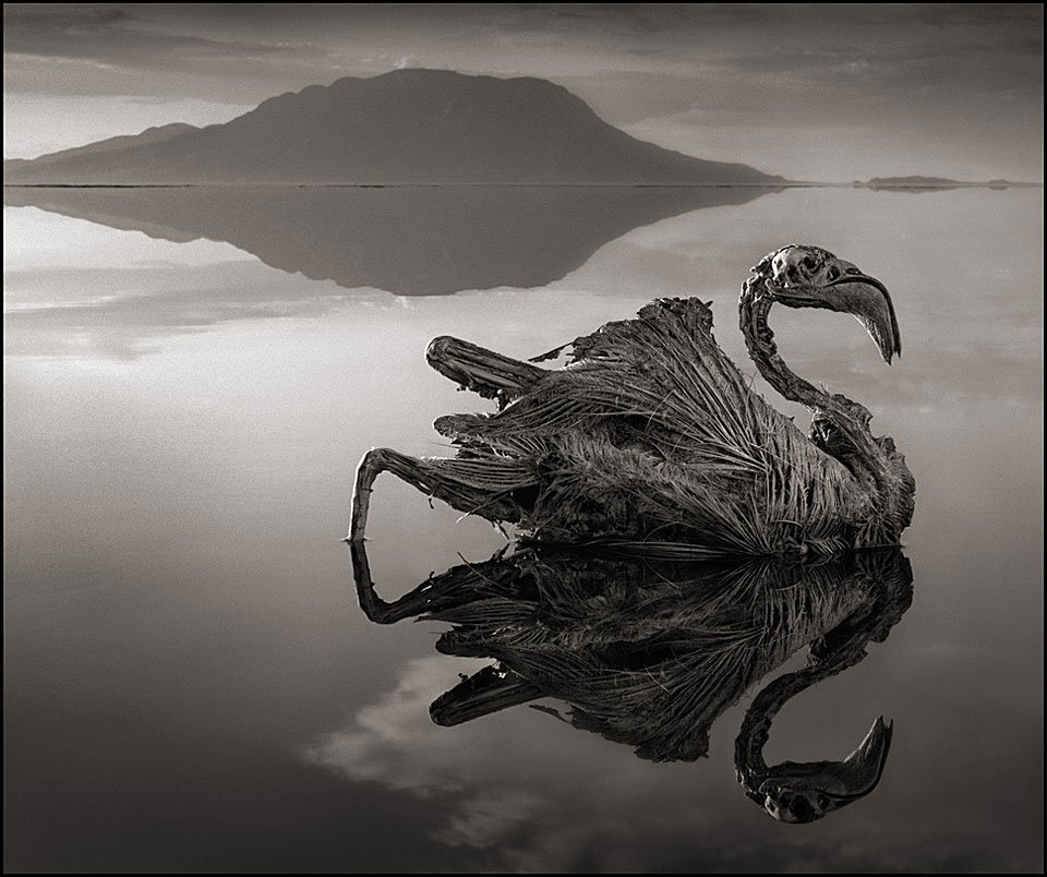 Medusa Lake