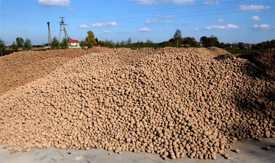 Locally-grown potatoes used in Chopin Potato Vodka