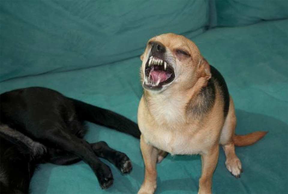 Dogs Caught Mid-Sneeze