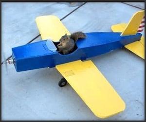 Squirrel Steals An Airplane