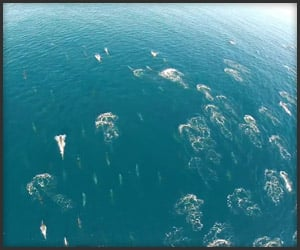 Flying Over Dolphins And Whales