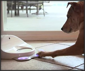 CleverPet Dog Treat Dispenser
