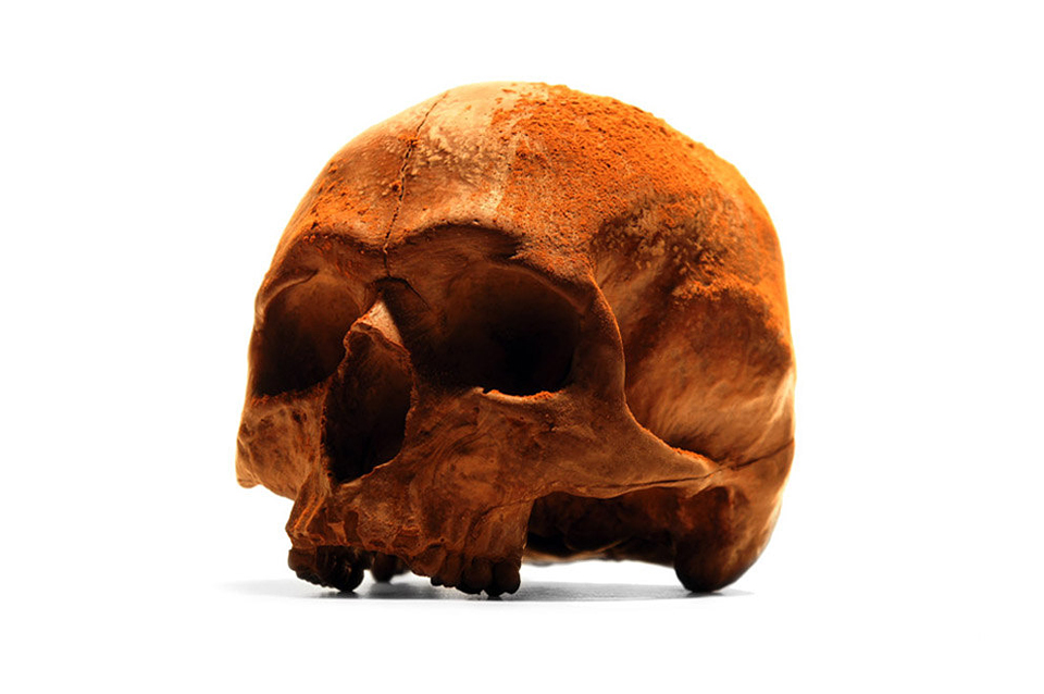 Life-Size Chocolate Skulls