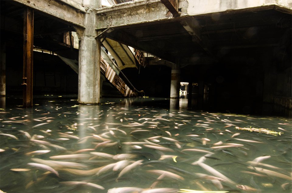 The Abandoned Fish Mall