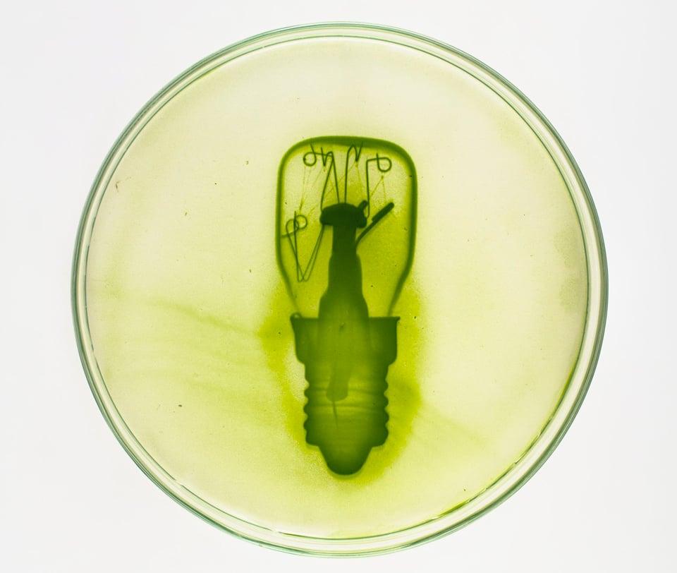 Lia Giraud: Algae-graphy