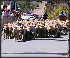 Jorge & the Running of the Sheep