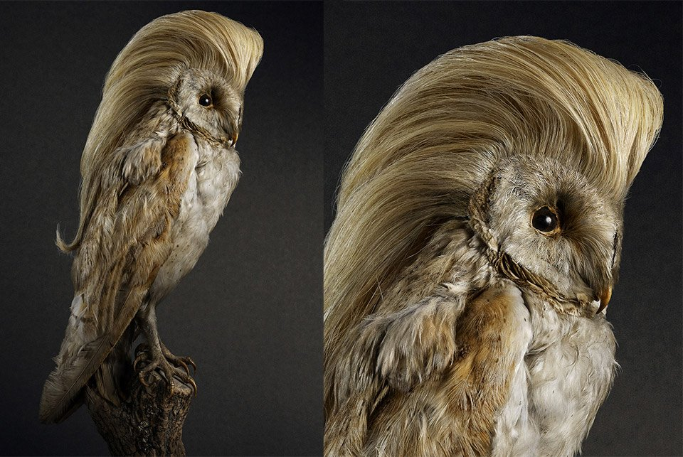 Birds with Hairdos